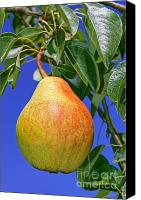 Summer Reliefs Canvas Prints - Ripe pear Canvas Print by Volodymyr Chaban