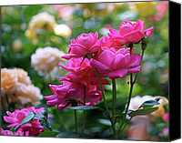 Roses Canvas Prints - Rittenhouse Square Roses Canvas Print by Rona Black
