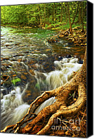 Roots Canvas Prints - River rapids Canvas Print by Elena Elisseeva