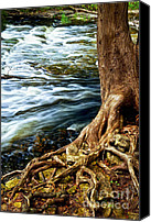 Roots Canvas Prints - River through woods Canvas Print by Elena Elisseeva