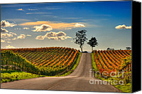 Sunny Vineyard Photo Canvas Prints - Road To Happiness Canvas Print by Mars Lasar