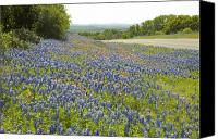 Bluebonnets Canvas Prints - Roadside Blue Canvas Print by Robert Anschutz