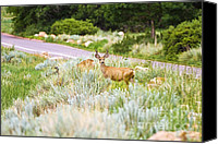 Mule Deer Canvas Prints - Roadside Buck Canvas Print by Scott Pellegrin