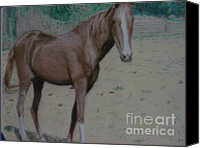 Equine Pastels Canvas Prints - Robins Horse Canvas Print by Shawn  Sanderson
