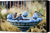 Animals In The Wild Canvas Prints - Robins On Birdbath Canvas Print by Barbara Rich