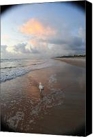 East Coast Canvas Prints - Rocko at Sunrise Canvas Print by Mandy Shupp