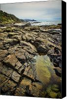 Craggy Canvas Prints - Rocky Coast Canvas Print by Heather Applegate