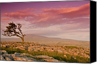 Solitude Canvas Prints - Rocky Landscape With Lone Tree In Sunset Canvas Print by John Ormerod