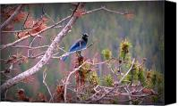 Southern Rocky Mountains Canvas Prints - Rocky Mountain Stellers Jay Canvas Print by Aaron Burrows