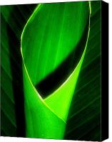 Canna Canvas Prints - Rolled Canna Leaf Canvas Print by Beth Akerman
