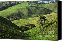 Rural Scenes Canvas Prints - Rolling Hills in Caizan Canvas Print by Heiko Koehrer-Wagner
