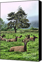 Animals Ceramics Canvas Prints - Roosevelt Elk Lounging Canvas Print by Nena Trapp