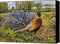 Pheasant Painting Canvas Prints - Rooster Pheasant in the Garden Canvas Print by Steve Spencer