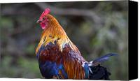 Chicken Canvas Prints - Rooster Rooster Canvas Print by Mike  Dawson