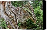 Roots Canvas Prints - Roots - Welcome to Olympic National Park WA USA Canvas Print by Christine Till