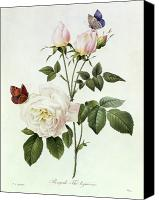 Leaves Painting Canvas Prints - Rosa Bengale the Hymenes Canvas Print by Pierre Joseph Redoute