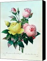 Redoute; Pierre Joseph (1759-1840) Canvas Prints - Rosa Lutea and Rosa Indica Canvas Print by Pierre Joseph Redoute
