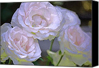 Floral Photo Canvas Prints - Rose 120 Canvas Print by Pamela Cooper