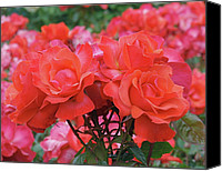 Decorative Floral Canvas Prints - Rose Abundance Canvas Print by Rona Black