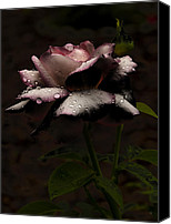 Barbara Middleton Canvas Prints - Rose After Dark Canvas Print by Barbara Middleton
