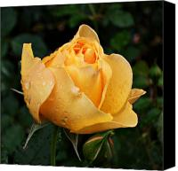 Northwest Art Canvas Prints - Rose after the rain Canvas Print by Cathie Tyler