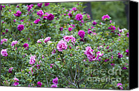 Roses Canvas Prints - Rose Garden Canvas Print by Frank Tschakert