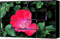Digitally Altered Floral Photo Canvas Prints - Rose Interrupted Canvas Print by Teresa Blanton