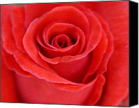   Canvas Prints - Rose Canvas Print by    