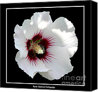 Father Christmas Canvas Prints - Rose of Sharon Flower and Bumble Bee Canvas Print by Rose Santuci-Sofranko
