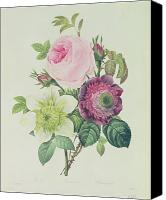 Redoute; Pierre Joseph (1759-1840) Canvas Prints - Rose Canvas Print by Pierre Joseph Redoute