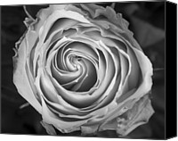 Rose Bud Canvas Prints - Rose Spiral Black and White Canvas Print by James Bo Insogna