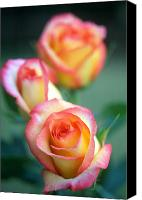 Flower Photos Canvas Prints - Rose Trio Canvas Print by Kathy Yates