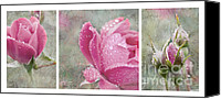 Triptych Canvas Prints - Rose Triptych 111 Canvas Print by Betty LaRue