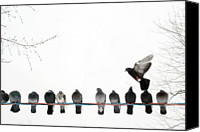 Flock Of Birds Canvas Prints - Row Of Pigeons On Wire Canvas Print by Ernest McLeod