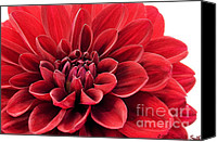 Susan M. Smith Canvas Prints - Ruby Red Canvas Print by Susan Smith