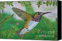 Male Hummingbird Canvas Prints - Ruby Throat Hummingbird Canvas Print by William Ohanlan