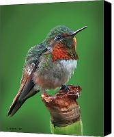 Ruby Throated Canvas Prints - Ruby-throated Hummingbird Canvas Print by Larry Linton