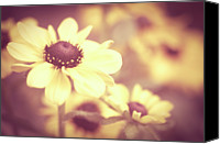 Susan Canvas Prints - Rudbeckia Flowers Canvas Print by Dhmig Photography