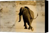 Elephant Running Canvas Prints - Run-Tembo-Run Canvas Print by Douglas Barnard