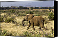 Elephant Running Canvas Prints - Running Elephant Canvas Print by Bob Falconer