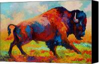 Western Canvas Prints - Running Free - Bison Canvas Print by Marion Rose