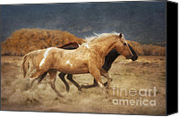 Horses Photographs Canvas Prints - Running Free Canvas Print by Heather Swan