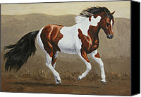 Wild Horses Canvas Prints - Running Pinto Mustang Canvas Print by Crista Forest