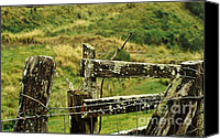 Barbed Wire Fences Canvas Prints - Rustic Fence Canvas Print by Marilyn Wilson