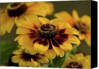 Toto Canvas Prints - Rustic Rudbeckia Canvas Print by Maria Suhr
