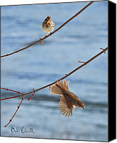 Fine Photography Art Canvas Prints - Rusty Capped Sparrows Male and Female Canvas Print by Bob Orsillo