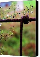 Family Farm Canvas Prints - Rusty Fence  and Raindrops Canvas Print by Thomas R Fletcher