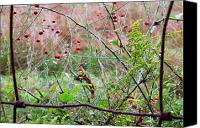 Family Farm Canvas Prints - Rusty Fence Red Berries and Raindrops Canvas Print by Thomas R Fletcher