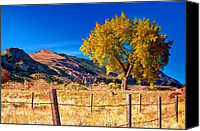 Garden Of The Gods Canvas Prints - Sacred Tree Canvas Print by Aron Kearney
