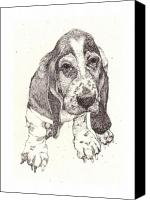 Hound Drawings Canvas Prints - Sad Sack Canvas Print by Deborah Wetschensky
